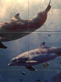 Latina Dolfins
