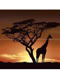 Africa P2-1D210