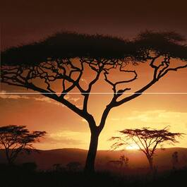 Africa P2-2D210
