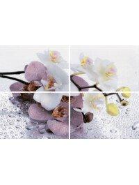 Alba Orchid
