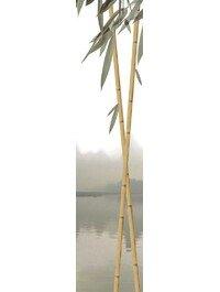 Бамбук ПН95