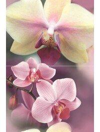 Blossom P2D183