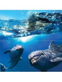 Waterlife Dolphins