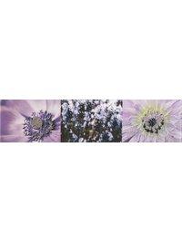 MAXIMA violet 2 тип 2
