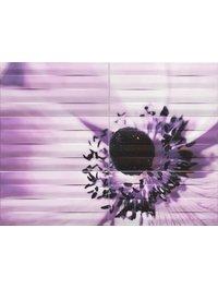 MAXIMA violet 2