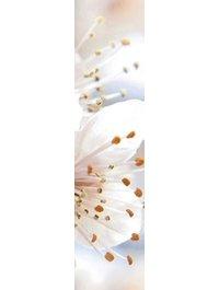 Sakura В61351