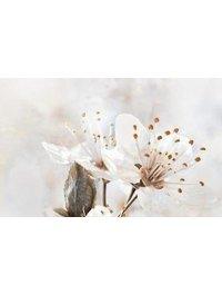 Sakura В61411